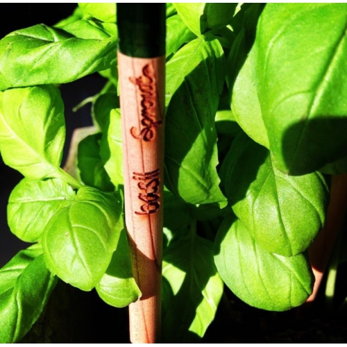 Sprout Pencil with Basil Seeds