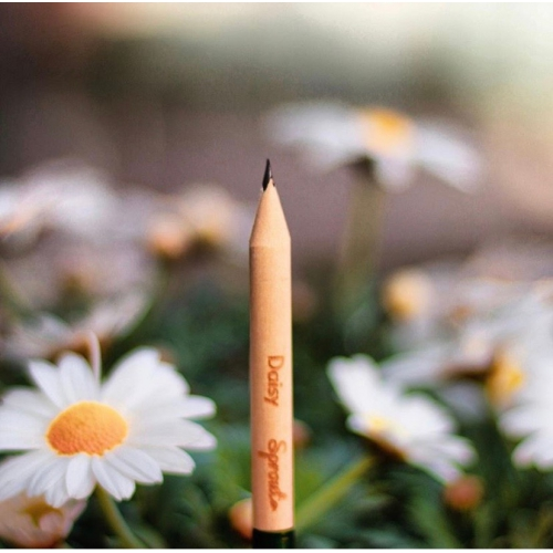 Sprout Pencil with Daisy Seeds